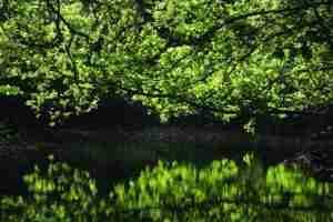 Gorran third - Galowras Ponds